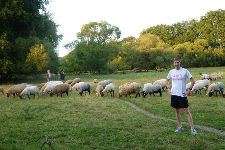 the-nuremberg-runaround-flock-of-sheep-edition-17