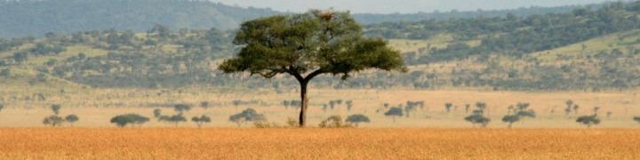 TanzaniaHeadernoText