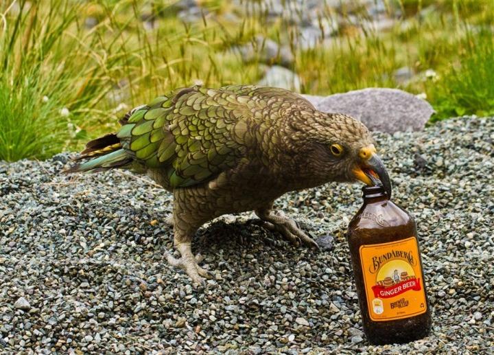 BeerBird