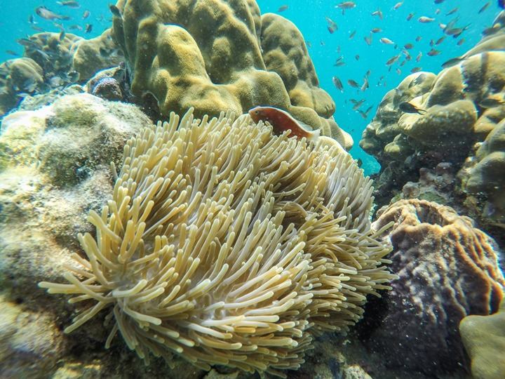 GoPro-Hero4-Snorkeling Underwater