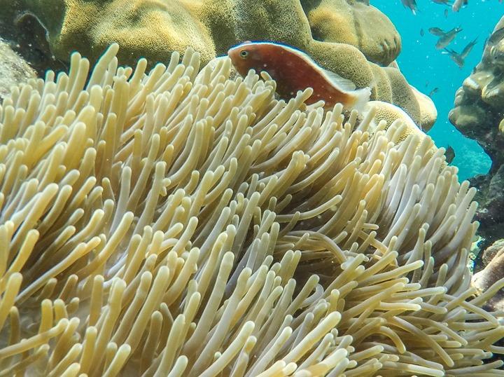 GoPro-Hero4-Snorkeling Underwater-WithWannaBeNemo