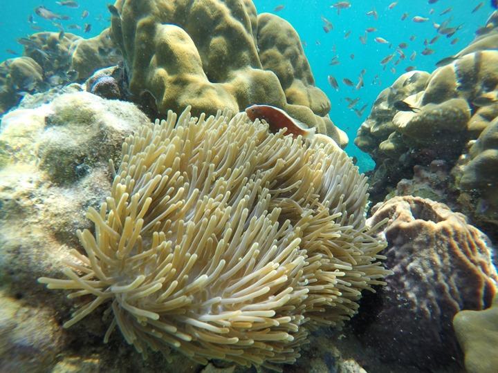 GoPro-Hero4-Underwater-FlatGlass-Nemo
