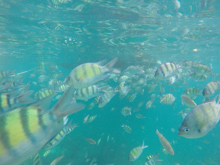 GoPro-Hero4-Underwater-Fishes