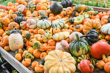 Image result for warm fall images