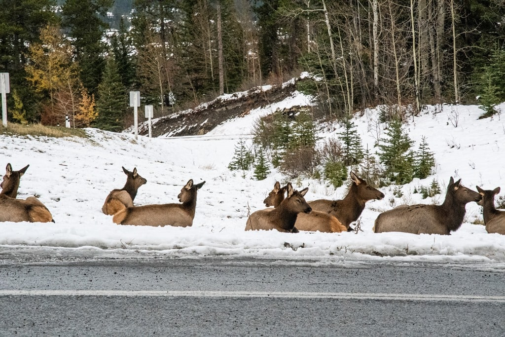 5 Random Things I Did This Past Week in Banff | DC Rainmaker